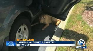président Spca arrêté pour chien sauvetage attaché dans le stationnement chaud lot