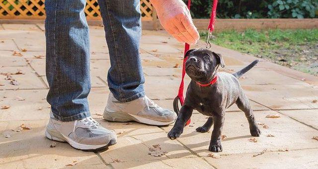 Puppy étant formé avec une friandise