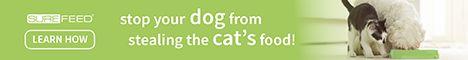 Arrêtez votre chien de voler la nourriture de votre chat!