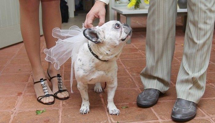 Y compris votre chien dans votre mariage