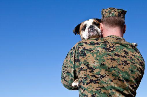 Soutenez nos troupes - en embarquant leurs chiens!