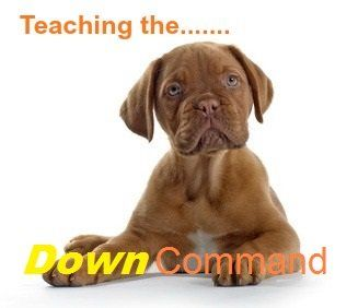 Comment enseigner à votre chien la`Down` command
