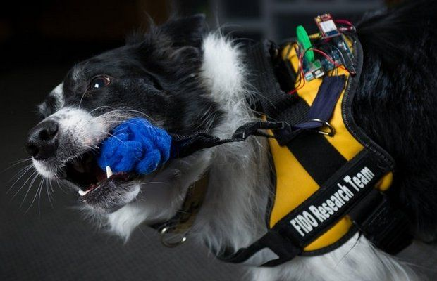 Technologiquement avancée Vest donne chiens de service une mise à niveau