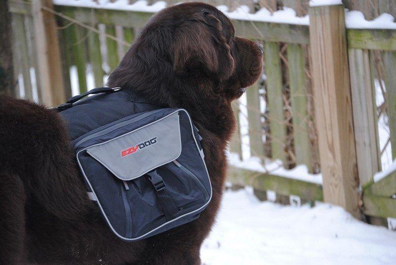 Le meilleur sac à dos de chien: plus qu`un simple accessoire
