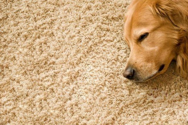 guide de tapis propre Le propriétaire du chien