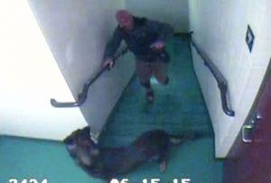 Les titres qui ont éclaté nos cœurs: où sont ces chiens et leurs agresseurs maintenant?