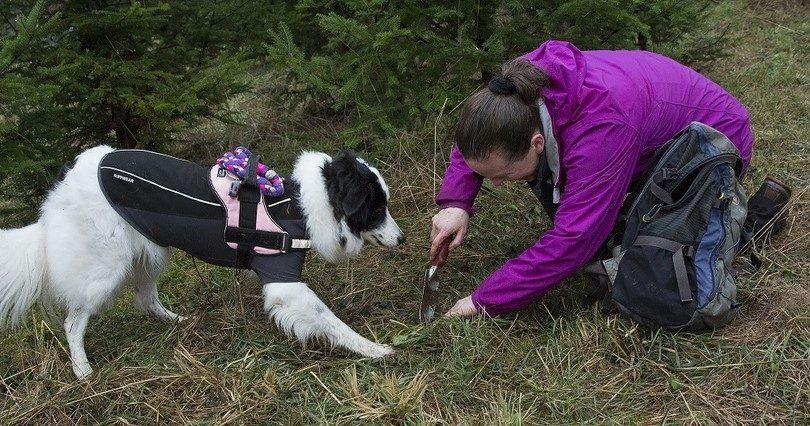 La race de chasse des chiens: les chasseurs de monde canin