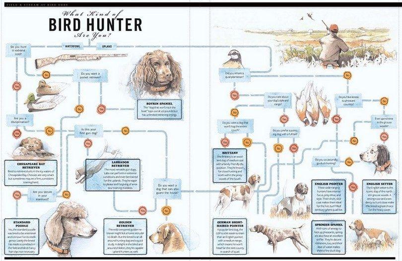 race de chien de chasseurs
