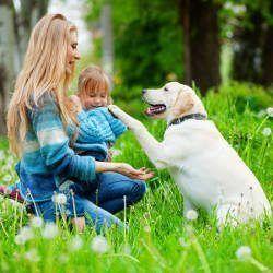 Importance de la formation du Labrador: Un bien comporté avec une femme et jeune fille
