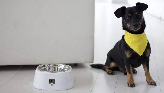 Le bol pour animaux de compagnie justfed maintient le programme d`alimentation de fido cohérente