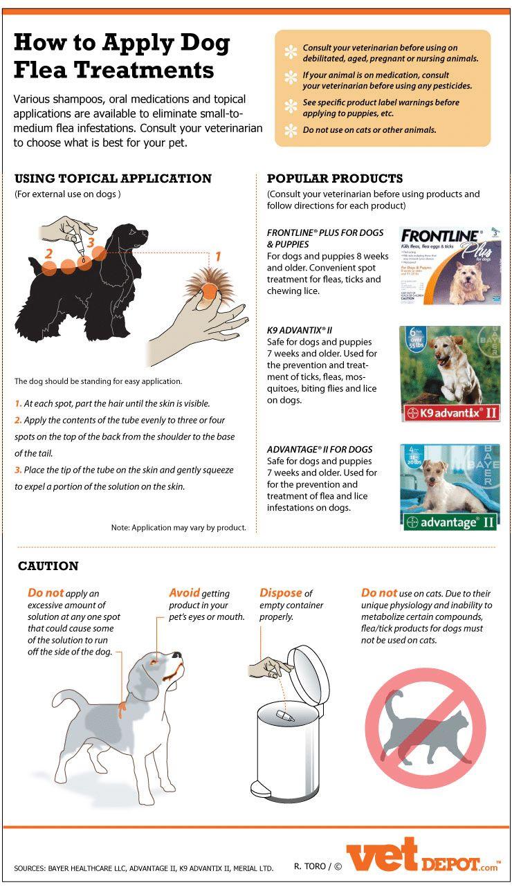 Le médicament le plus efficace contre les allergies de chien