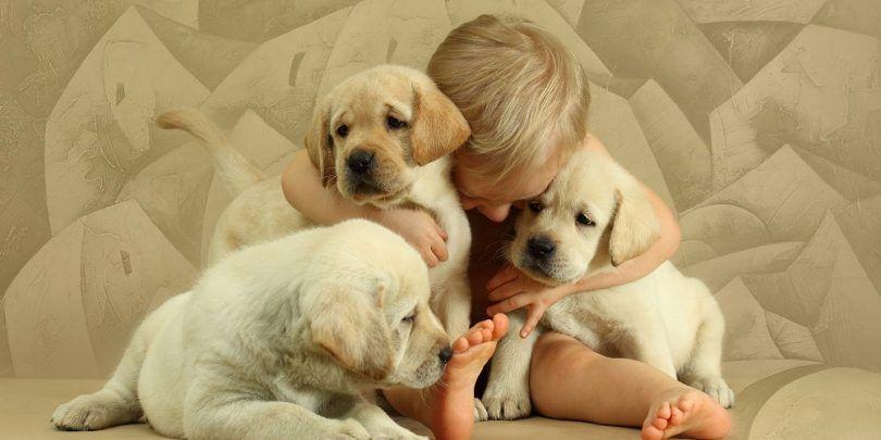 Les chiens les plus amicales: la cueillette d`un copain qui est tout aussi sympathique que vous êtes