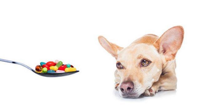 L`industrie des suppléments est de vous mentir: vos chiens peuvent être en danger