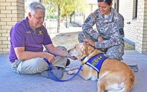 formation de chien de thérapie: comment obtenir votre chien certifié