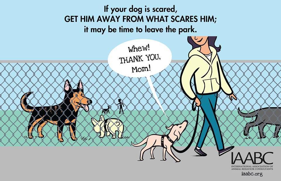 Association internationale des Consultants animaux de comportement