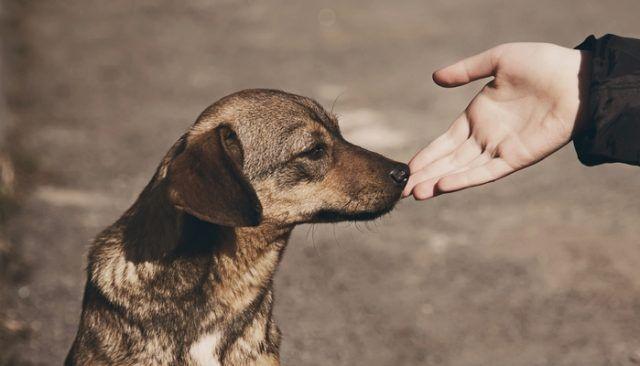 Ce chien était à quelques minutes de l`euthanasie et cela est arrivé