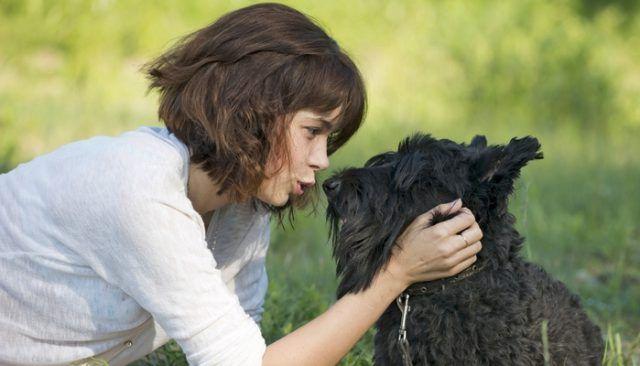 Cette nouvelle technologie donne à votre chien une voix