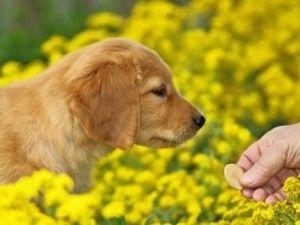 Ce magasin offre aux propriétaires Pet Avec plus sains produits alternatifs d`une manière unique