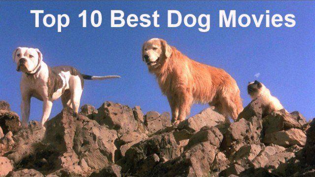 Top 10 des meilleurs films de chien que vous devez voir