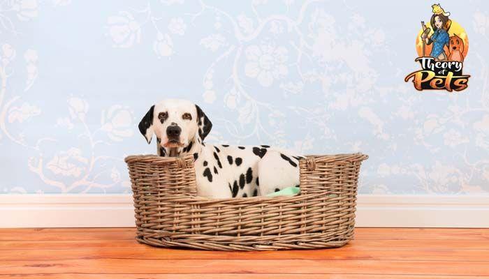 Top # 4: avantages pour la santé des lits pour chiens
