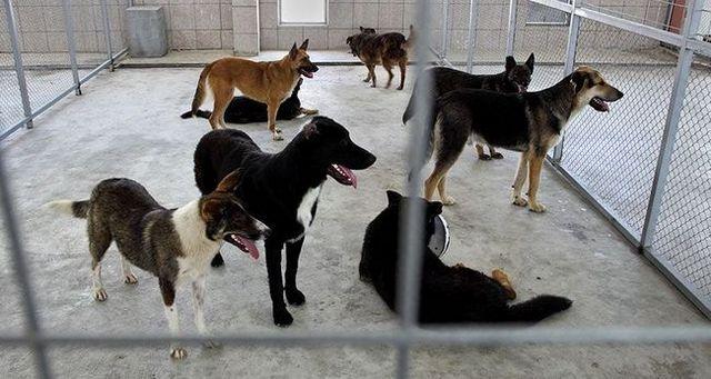 Un groupe de chiens dans un espace clos