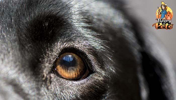 Top # 6: comment efficace et bénéfique des tests adn de chien sont?