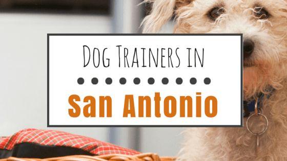 Top 8 options pour la formation de chien à san antonio