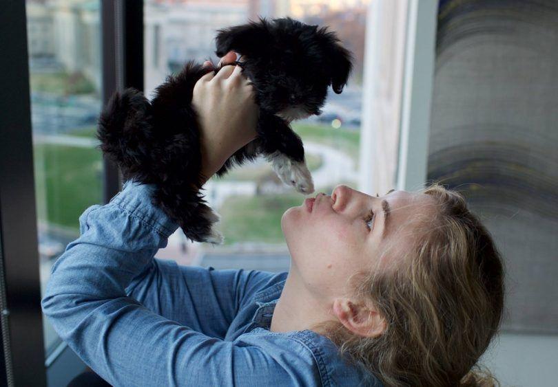 Les meilleurs chiens pour les personnes souffrant d`allergies