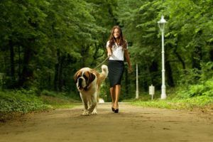 Les meilleurs conseils sur la façon d`enseigner à un chien à marcher en laisse