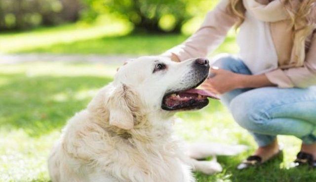 Suivi de votre comportement: une partie essentielle des soins de chien