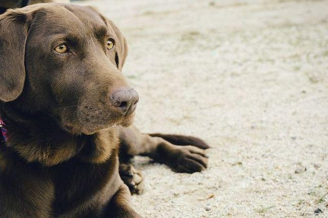 dog-569026_1280