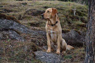 dog-548651_1280