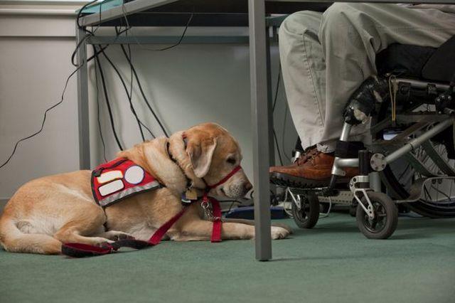 Vingt questions pour un dresseur de chiens de service
