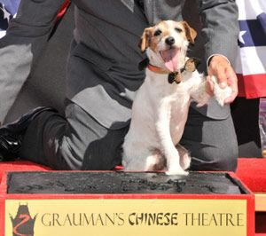 Uggie laisse pawprints au théâtre chinois de Grauman hollywood