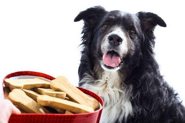 chien de jour, les recettes de festin de la Saint-Valentin