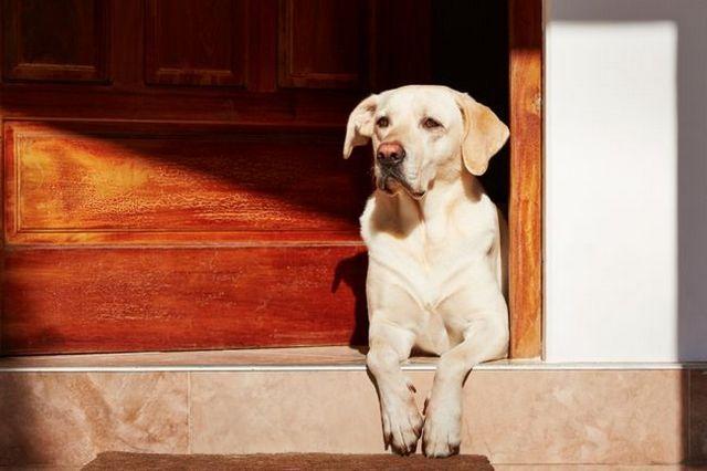 Vidéo: comment arrêter la porte boulonnage pour la sécurité de votre chien