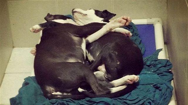 photo virale aide câlins chiens d`abri obtiennent de nouvelles maisons