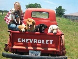 Vote dans les prix dogington post: meilleure célébrité chien aimant