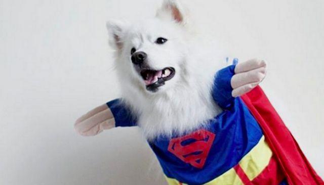 Attendez jusqu`à ce que vous voyez ces chiens étonnant photos superbes héros