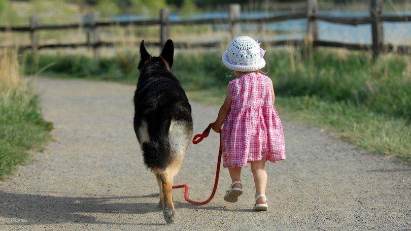 Petite fille marchant un chien