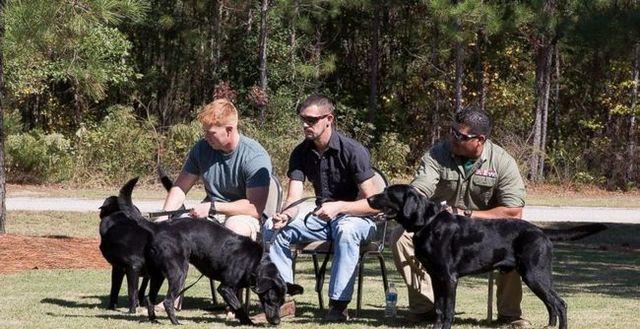 chiens de guerre et marines réunis