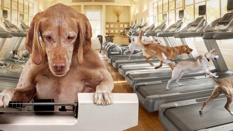 La perte de poids des aliments pour chiens: aider votre ami a versé quelques livres