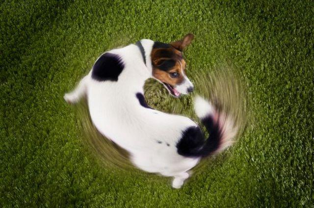 Pourquoi mon chien ne fait ça? comportements chien étranges expliqués