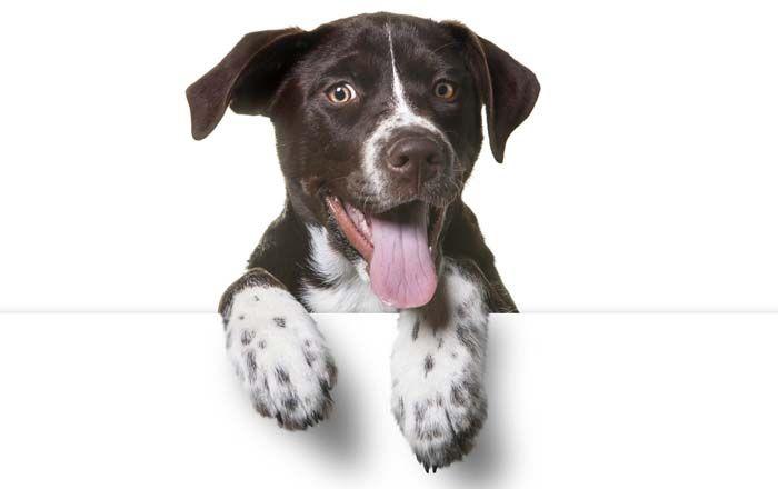 Comment puis-je savoir quelle race est mon chien