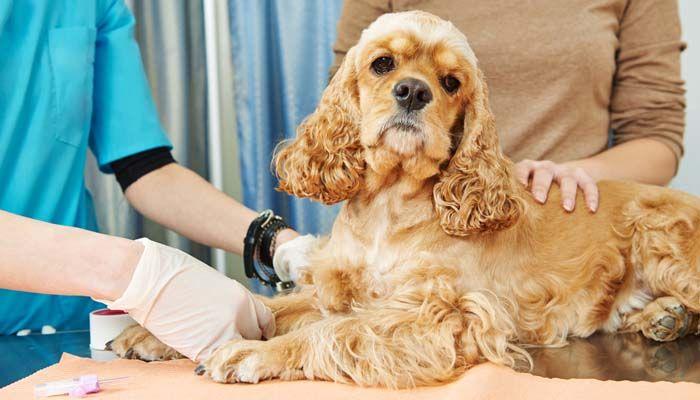Essayez un kit de test ADN de chien