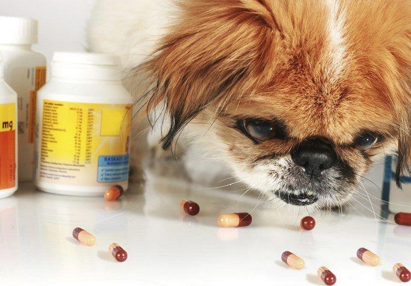 Que puis-je donner à mon chien pour la douleur: un guide détaillé