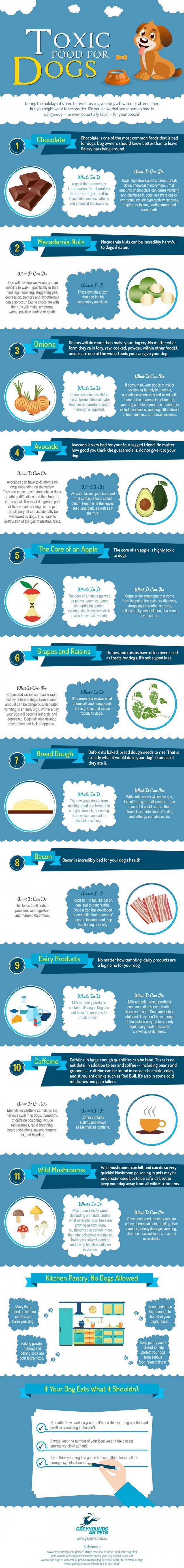 nourriture toxique pour votre chien
