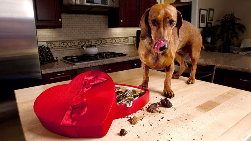 Quels sont les aliments mauvais pour les chiens: comprendre l`importance des chiens d`alimentation correctement