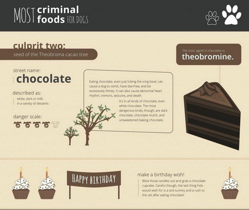 Chocolat toxique pour les chiens