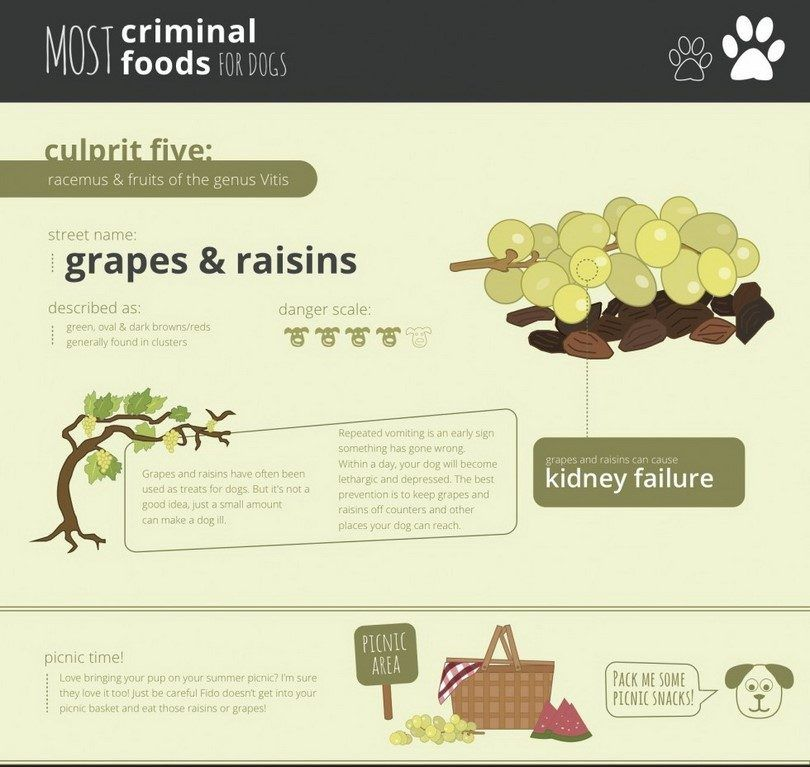 Grape toxique pour les chiens